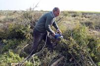 ÜÇPıNAR - 'Para Etmiyor' Diye Bin 200 Nar Ağacını Kesti