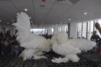 HAYVAN SEVGİSİ - Bu Tavukların Fiyatı Dudak Uçuklatıyor