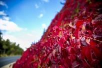 MANGAL KEYFİ - Sonbaharın Eşsiz Güzelliği Dülük'te Yaşanıyor