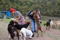 EREĞLI DEMIR ÇELIK - Terk Edilmiş 120 Köpeğe Yuva Oldular