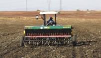 YAĞAN - Yağışları Fırsat Bilen Çiftçiler Tohum Ekmeye Başladı