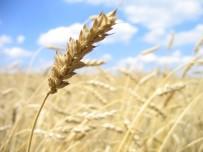 BİTKİSEL ÜRÜNLER - Bitkisel Ürün Sigortalarında Yeni Üretim Sezonu Açıldı