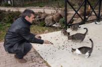 KıŞLA - Bozüyük Belediyesi Sokak Hayvanlarını Unutmadı