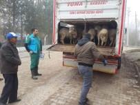 AHMET AYDIN - Çavdarhisar'da Genç Çiftçilere Küçükbaş Hayvan Dağıtıldı
