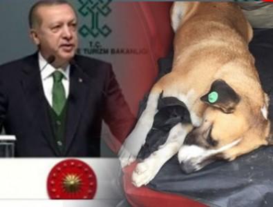 Eyüp Belediyesi'nin skandalı Erdoğan'a iletildi!