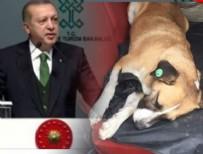 HAYVAN HAKLARı - Eyüp Belediyesi'nin skandalı Erdoğan'a iletildi!
