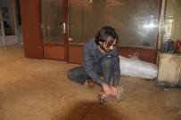 YAVRU KEDİ - Kilis'te Yavru Kedi Kurtarma Operasyonu