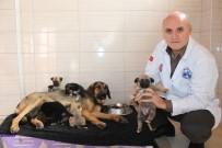 ÇAMAŞIR MAKİNESİ - Köylü Ağlayarak Yardım İstedi, 21 Yavru Köpek Kurtarıldı