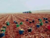 MEVSİMLİK İŞÇİ - Patates Hasadını Bitiren İşçilerin Kovaları Fırlatma Anını Yansıtan Fotoğraf Fenomen Oldu