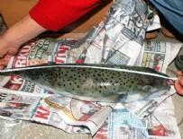 BALON BALIKLARI - Marmaris'te balon balığı artışı tedirginlik yarattı