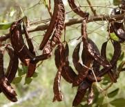 PROPOLIS - 'Mevsim Değişikliği İle Değişime Uğramayın'