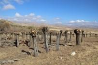 MEHMET TURAN - Orman Dalsız, Yapraksız Kaldı