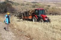 MEHMET TURAN - Dalsız Yapraksız Orman Dikkat Çekiyor