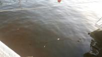 OKSIJEN - Güllük Sahili Kahverengiye Boyandı