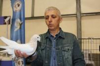 YARIŞ - Dünya'da Eşi Olmayan 100 Bin TL'lik Güvercinler Fiyatıyla Şaşırtıyor
