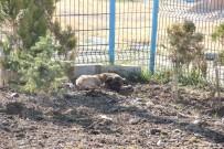 YAVRU KÖPEK - Yavru Köpekler Duyarlı Vatandaşlar Sayesinde Ölmekten Son Anda Kurtarıldı