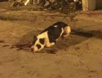 BIÇAKLI SALDIRI - Köpekten korkan şahıs sahibi ile köpeğini bıçakladı