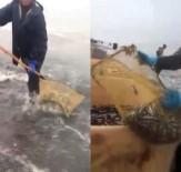 ABHAZYA - Rusya'da Hamsi Sahile Vurdu