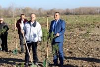İSMAİL KARAKULLUKÇU - Arifiye'de Eski Döküm Sahası Orman Oluyor