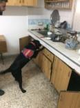 KAPAKLı - Eğitimli Dedektör Köpek 'Limit'ten Kaçış Yok