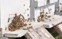 SARIYER - 120 Kovan Arılarla Birlikte Çalındı