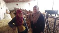 BESİ ÇİFTLİĞİ - Eltiler Hayvan Çiftliği Kurdu, Kadınlara Örnek Oldu