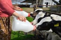 SÜT ÜRETİMİ - En Mutlu Süt Üreticileri İzmir'de
