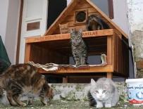 HAYVAN HAKLARı FEDERASYONU - Kedi ve köpekler kışı 'ev'lerinde geçirecek