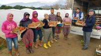 OSMAN YıLDıRıMKAYA - Yaz Çileğini Kışın Da Üreterek Kazançlarını Katladılar
