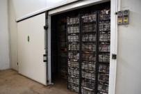 KARNABAHAR - Tepebaşı Belediyesi Soğuk Hava Deposu İle Üreticinin Emeği Değer Kazanıyor