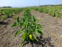 ULUDAĞ ÜNIVERSITESI - Üniversiteden Halka 'Organik Tarım' Eğitimi