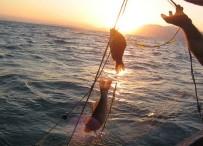 GIDA KODEKSİ - Eğirdir Gölü'nden Avlanan Balıklar Temiz Çıktı