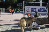 FUTBOL TURNUVASI - Hayvan Dostu Okuldan İlginç Turnuva