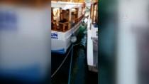 YAT LİMANI - Teknecilerin 'Akdeniz Foku' Heyecanı