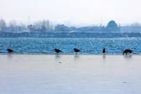 YAĞAN - Van'ın Sıhke Gölü Buz Tuttu