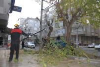 ŞEYH ŞAMIL - Bağlar'da Ağaçların Budama Ve Bakımı Yapılıyor