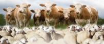 Çıldır İlçe Tarım Müdüründen Hayvan Güncelleme Uyarısı