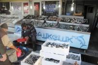 HÜSEYIN KALAYCı - Balıkçıların Yüzü Gülmüyor