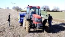 'Buğdayın Atası' Siyezin Geç Dönem Ekimi Yapılıyor