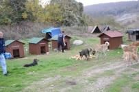SOKAK KÖPEKLERİ - Kartepe'de Sokak Hayvanları Barınakları Yenilendi