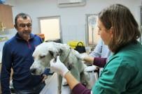 BODRUM BELEDİYESİ - Vücuduna Yüzlerce Saçma İsabet Eden Köpek Koruma Altına Alındı