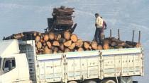 EGE BÖLGESI - Yazın Yanan Ormanlık Alanlar Baharda Yeşerecek