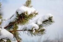 ENDEMIK - Zonguldak Ormanlarında Sonbahar İle Kışın Renkleri Büyülüyor