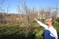 ERİK AĞACI - Erik Ağacı Aralık Ayında Çiçek Açtı