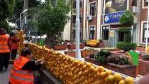İLK KURŞUN - Festival Süslemeleri İçin 30 Ton Narenciye Kullanıldı