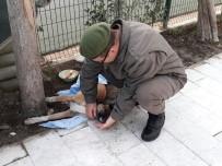 SELIMIYE - Yaralı Köpeğe Jandarma Şevkati