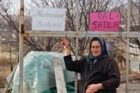 ÇAYBOYU - Şehir Hayatından Sıkılıp Geldikleri Sivas'ta Sera Kurdular