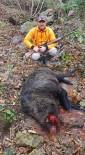 OKÇULAR - Avcılar Domuzlara Geçit Vermiyor