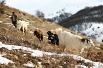 KAR YAĞıŞı - Besiciler Karlı Dağlarda Hayvanlarını Besliyor
