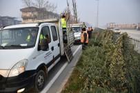 KÖPRÜLÜ - Bursa-Ankara Yolu Ağaçlandırıldı